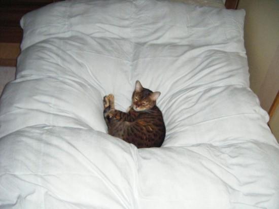 寝てるのに・・・ まぶしいではないですか。