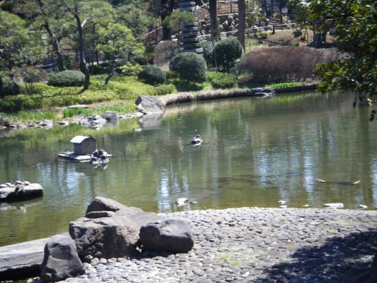 岩には亀亀亀亀、鴨鴨、そして 見にくいけど鯉鯉。